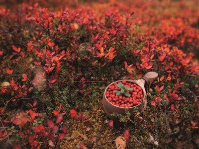Herbstfarbenmeer